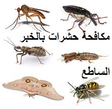 مكافحة حشرات بالخبر