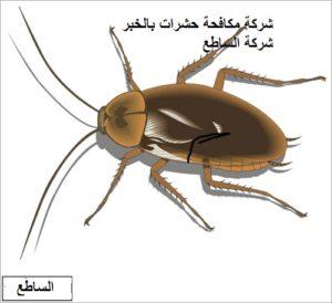 مكافحة الحشرات بالخير