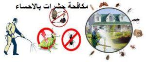 مكافحة حشرات بالاحساء