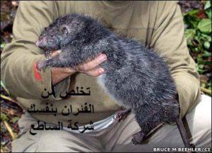 القضاء علي الفئران وطردها من منزلك