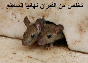 تخلصي من الفئران بنفسك