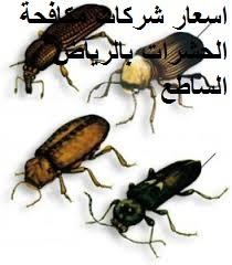 اسعار شركات مكافحة الحشرات في الرياض