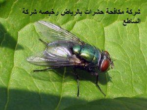 شركة مكافحة حشرات بالرياض رخيصه