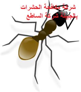 شركة مكافحة الحشرات بالجبيل
