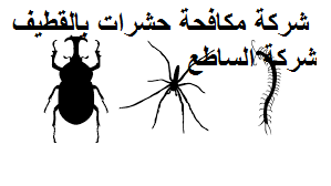 شركة مكافحة حشرات بالقطيف رخيصة